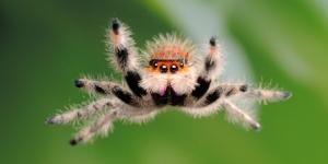 """Googla """"cute spider"""" yaaay"""